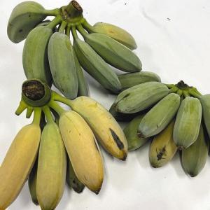 天白区/名古屋市農業センター・バナナのジェラート販売
