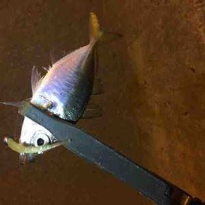 博多湾釣行記VOL.26