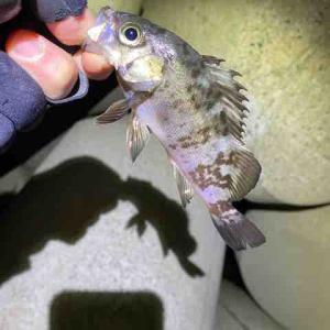 シーバス釣れたので結果オーライ…<玄海方面釣行記 VOL.10>
