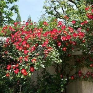 薔薇のお屋敷へ・・