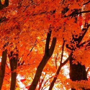 お伺いしたお宅の玄関先の紅葉が美しく