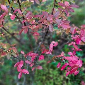 紅く染まる葉