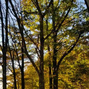黄金色の秋の日差しの午後のひととき