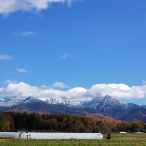 11月雪景色と紅葉との八ヶ岳山麓