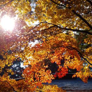 秋 一期一会 お元気で