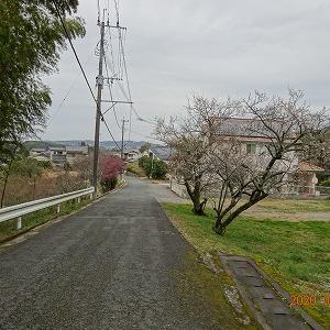 40202-8 福岡県大牟田市(三池)