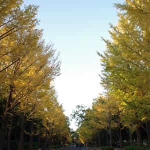 所沢航空記念公園の銀杏並木