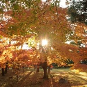 殿ヶ谷戸庭園に紅葉狩り1