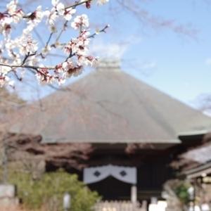 梅に早咲きの桜 多聞院(2/23)
