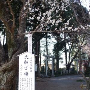 梅の花咲く北野天神社(2/24)