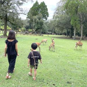 我が家の夏休み第三弾⑥鹿に大喜び♡