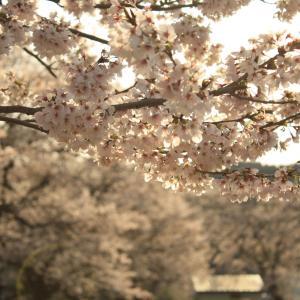 ☆桜満開・新緑の下滝・新型コロナウイルスに関する対策☆