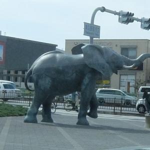 堺市のゾウさん!