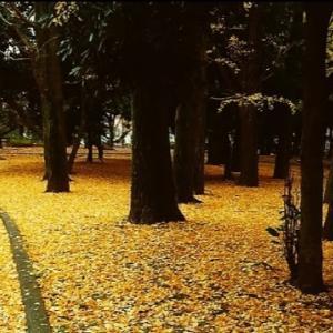 秋が近づいてきてる