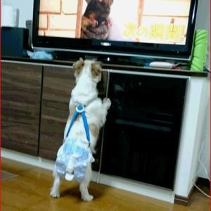 TV 鑑賞