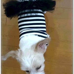 チュチュのドレス