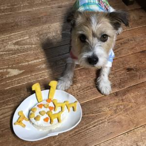 犬の手作り健康ご飯&トライアル