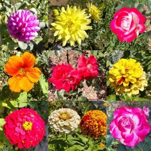 しほさんぽ花の彩りに心が躍りました色鮮やかなお花見てると癒されますね#しほさんぽ ...
