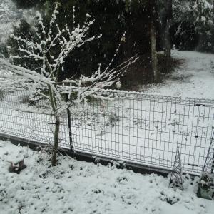 え?雪?byインゲンベビー