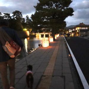 松江水燈路  夜の部