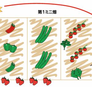 購入苗のミニ畑への定植作業記録(5月31日作業)