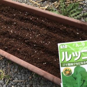 ルッコラは今年もプランター栽培。さっそく発芽してきました