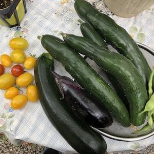 9月中旬に入り、なんとか頑張っている野菜たちもそろそろ終了が近いようです〜9月13日の小樽はぐっと気温が下がりました