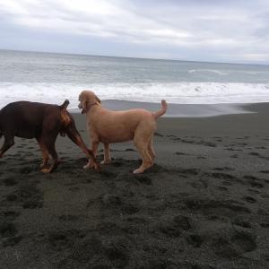 Walking on the beach !