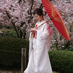 兼六園の桜と花嫁