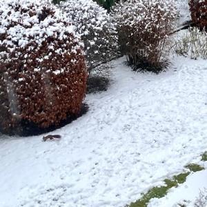 アナ雪フィーバー&雪が積もったので雪遊び☆