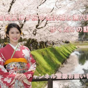 ミス加賀友禅が桜の金沢城と兼六園を歩くだけの動画