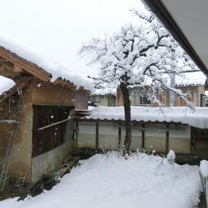 ついに雪が積もりました