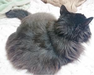 少し年配の猫の里親さん募集します。