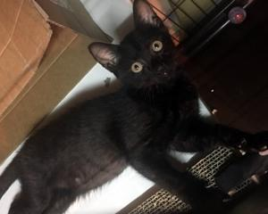 性格のいい黒猫君