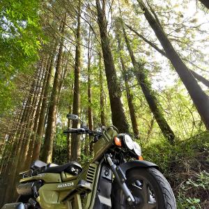 PS250を森の中で撮影する