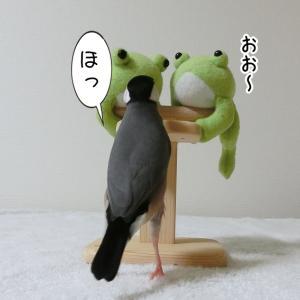 カエルたちからの課題