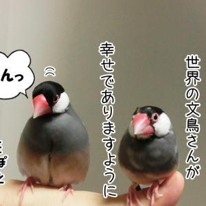 文鳥の日おめでとう(10/24追記)