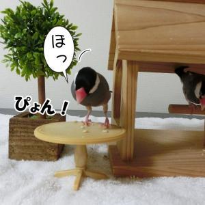 ただ青米を食べているだけの文鳥