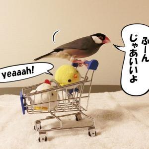 お買い物へ、ゴー!