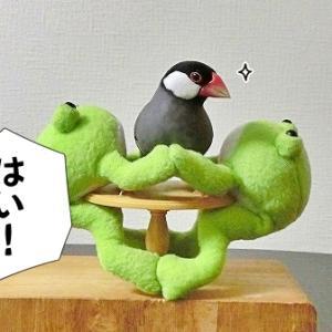 鳥とカエルの組体操