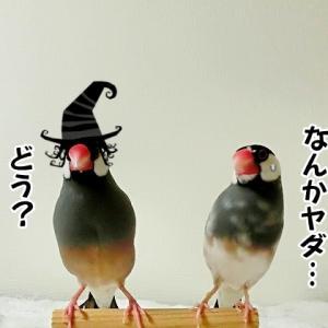 強引なハロウィンパーティー