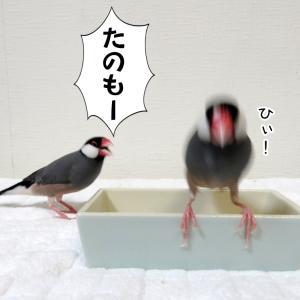 青米とシード、どっちが好き?