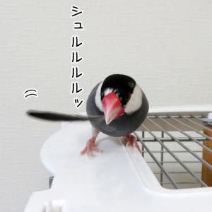 どっちの羽でしょうか!?