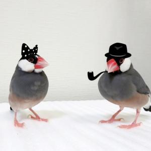 コスプレ文鳥
