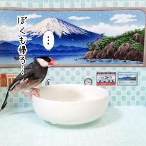 文鳥たちの銭湯②