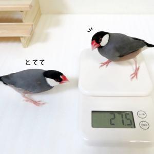 ドキドキの体重測定