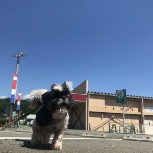 猛暑日って。。