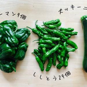 家庭菜園*今日の収穫