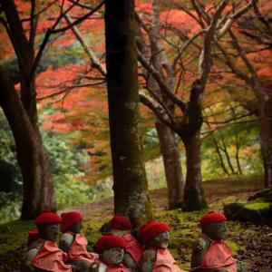 大寧寺の紅葉 11/13撮影