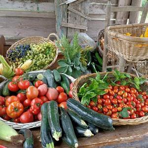Guise の家庭菜園とキッチンかな?
